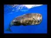 Baleia Cachalote 2