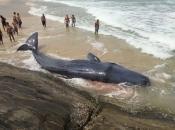 Baleia Cachalote 5