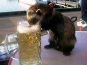 animais-e-bebidas-alcoolicas-5