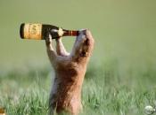 animais-e-bebidas-alcoolicas-6