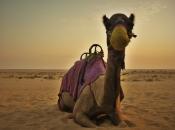 camelo-1