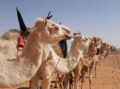 camelo-2
