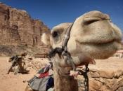 camelo-3