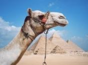 camelo-6