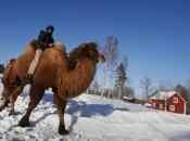 camelo-7