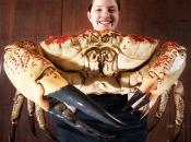 Caranguejo gigante da Tasmânia 2