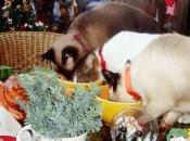 animais-comida-da-ceia-2