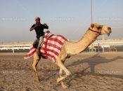 Racing camel trainer riding his dromedary in Doha, Qatar, Middle East