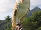 Coruja-das-torres 6