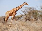 Fotos de Girafa 5