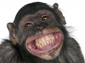 Dentes de Primatas 1