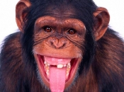 Dentes de Primatas 3