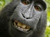 Dentes de Primatas 4