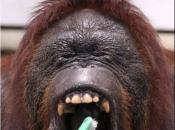 Dentes de Primatas 6