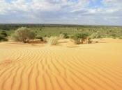 Deserto de Kalahari 3