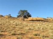 Deserto de Kalahari 6