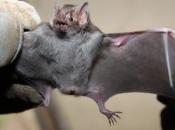 doencas-causadas-morcego-5