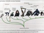 Evolução dos Primatas 1