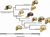 Evolução dos Primatas 2