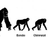 Evolução dos Primatas 4