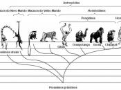 Evolução dos Primatas 5