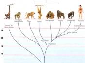 Evolução dos Primatas 6