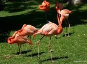 Flamingo-rubro4