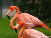 Flamingo-rubro5