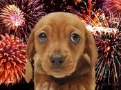 animais-e-fogos-de-artificio-3