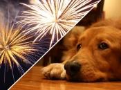 animais-e-fogos-de-artificio-6