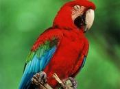Fotos da Arara Vermelha 7