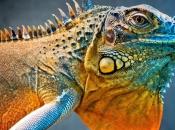 Fotos da Iguana 11
