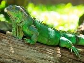 Fotos da Iguana 14