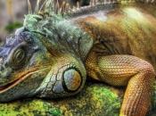 Fotos da Iguana 5