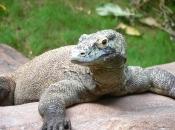 Fotos de Dragão de Komodo 2