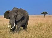 Fotos de Elefantes Africanos1