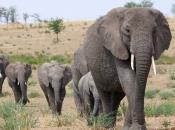 Fotos de Elefantes Africanos11