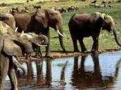 Fotos de Elefantes Africanos14