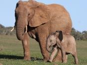 Fotos de Elefantes Africanos3