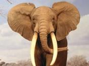 Fotos de Elefantes Africanos6