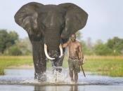 Fotos de Elefantes Africanos7