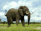 Fotos de Elefantes Africanos9