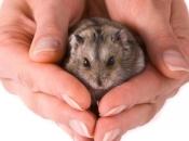 Fotos de Hamster13