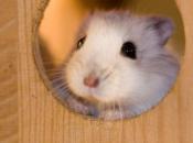 Fotos de Hamster15