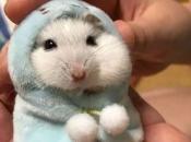 Fotos de Hamster2
