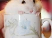 Fotos de Hamster4
