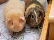 Fotos de Hamster5
