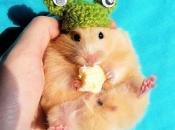 Fotos de Hamster12
