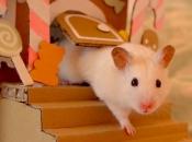 Fotos de Hamster14