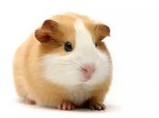 Fotos de Hamster3
